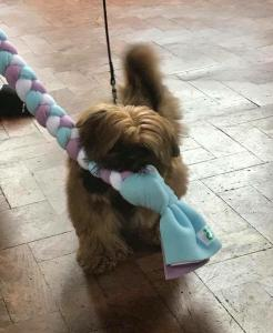 pup with long ragger toy