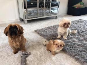 three dogs sitting on carpet