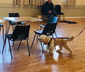 dog sniffing round chairs