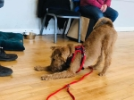 brown terrier-type dog doing play bow