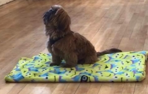 puppy sitting on mat